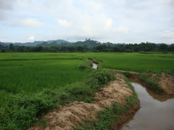Irrigation ditch.