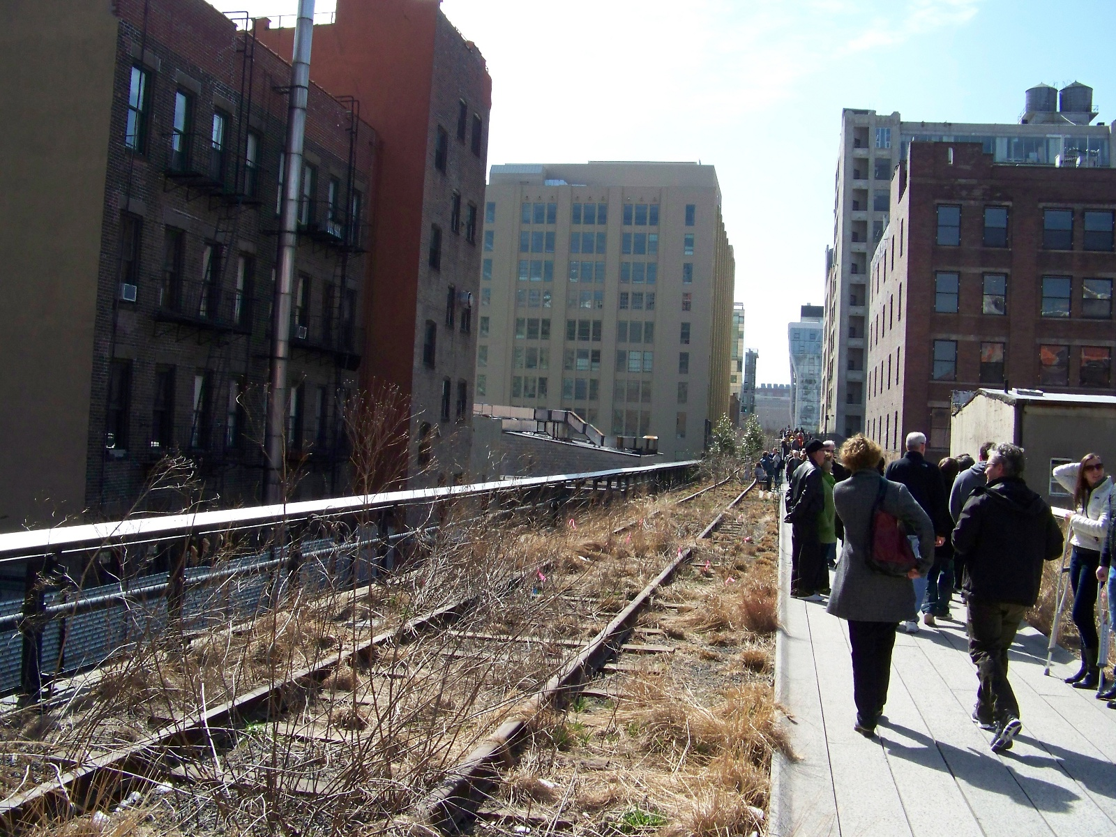 View of High Line Park.