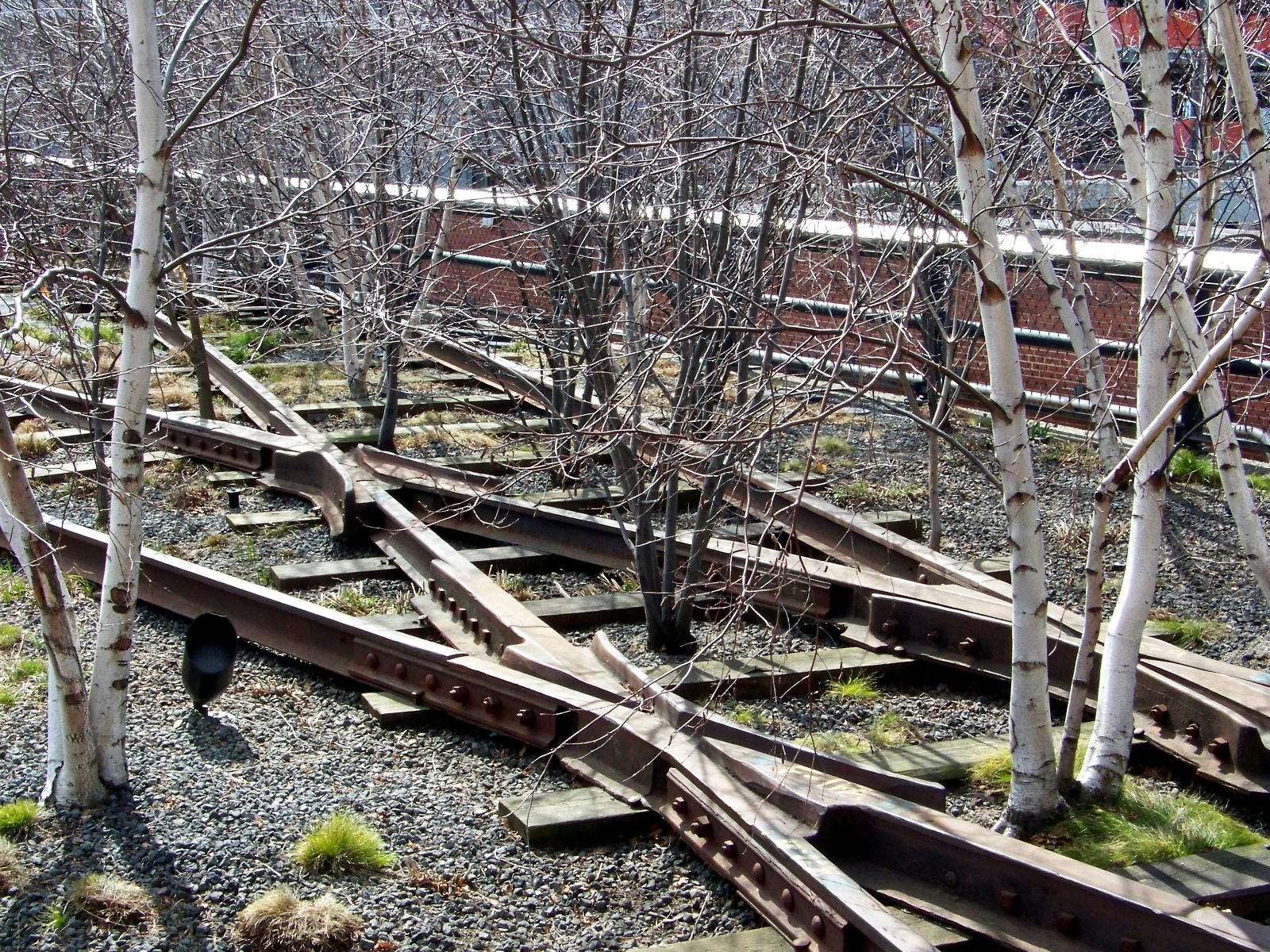 Trees growing through the rails.