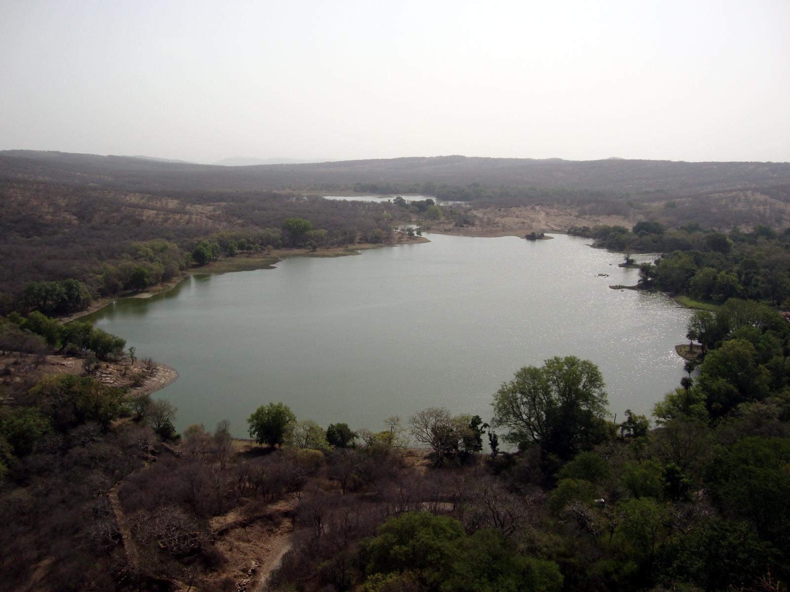 Padam Talao, in Ranthambhore National Park.